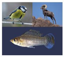 2015species