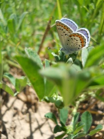 butterfly in field